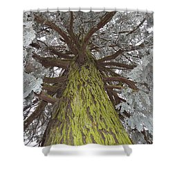Shower Curtain featuring the photograph Ready For Christmas by Felicia Tica