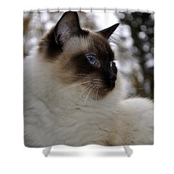 Ready For My Closeup Shower Curtain by Cathy Mahnke