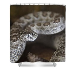 A Rattlesnake Thats Ready To Strike Shower Curtain