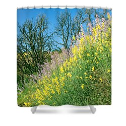 Shower Curtain featuring the photograph Rebirth After Wildfires - San Gabriel Mountains California by Ram Vasudev