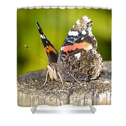 Red Admiral Butterfly Shower Curtain by David Lee Thompson