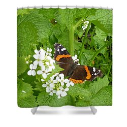 Shower Curtain featuring the photograph Red Admiral Butterfly by Lingfai Leung