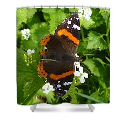 Shower Curtain featuring the photograph Red Admiral In Toronto by Lingfai Leung