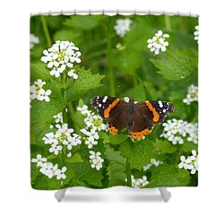 Shower Curtain featuring the photograph Red Admirals by Lingfai Leung