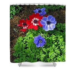 Red And Blue Anemones Shower Curtain by Ausra Huntington nee Paulauskaite