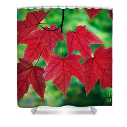 Red And Green Shower Curtain by Inge Johnsson
