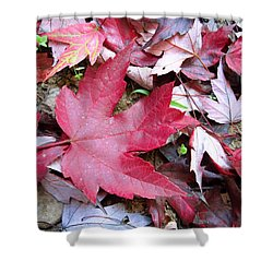 Red And Green Of Fall Shower Curtain