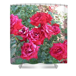 Red And Pink Roses Shower Curtain by Chrisann Ellis