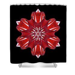 Red And White Amaryllis Vii Flower Mandala Shower Curtain by David J Bookbinder