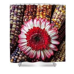 Red And White Mum With Indian Corn Shower Curtain by Garry Gay