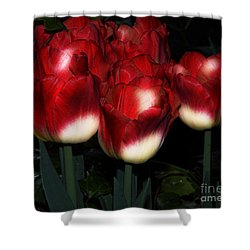 Red And White Tulips Shower Curtain by Kathleen Struckle
