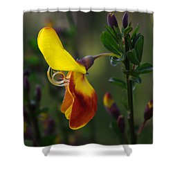 Red And Yellow Scotchbroom Shower Curtain by Adria Trail