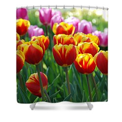 Shower Curtain featuring the photograph Red And Yellow Tulips  by Allen Beatty