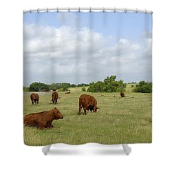 Shower Curtain featuring the photograph Red Angus Cattle by Charles Beeler