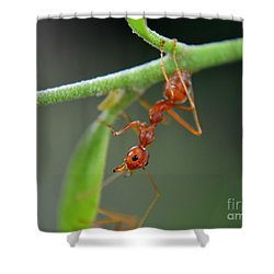 Red Ant Shower Curtain by Michelle Meenawong