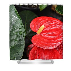 Red Anthurium Flower Shower Curtain by Denise Bird