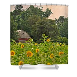 Red Barn Among The Sunflowers Shower Curtain
