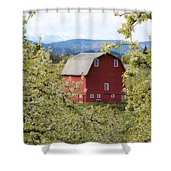 Shower Curtain featuring the photograph Red Barn And Apple Blossoms by Patricia Babbitt