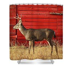 Red Barn Buck Shower Curtain
