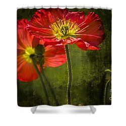 Red Beauties In The Field Shower Curtain by Heiko Koehrer-Wagner