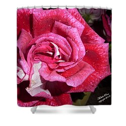 Red Beauty 2  Shower Curtain