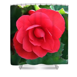 Red Begonia Shower Curtain by Sergey Lukashin