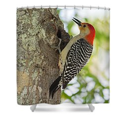 Red-bellied Woodpecker Shower Curtain by John M Bailey