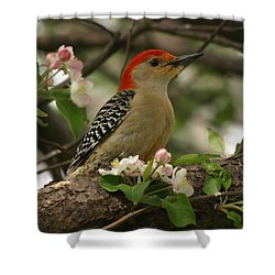 Shower Curtain featuring the photograph Red-bellied Woodpecker by James Peterson