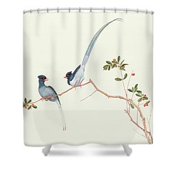 Red Billed Blue Magpies On A Branch With Red Berries Shower Curtain by Chinese School