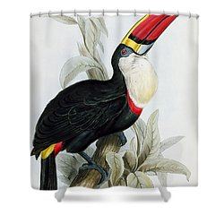 Red-billed Toucan Shower Curtain by Edward Lear