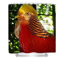 Red Bird Shower Curtain by Pamela Walton