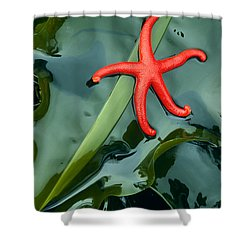 Red Bloodstar Shower Curtain by Inge Johnsson
