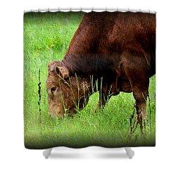 Red Brangus Bull Shower Curtain by Maria Urso