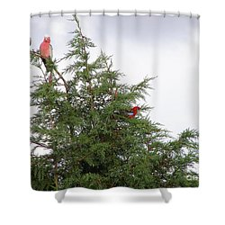Shower Curtain featuring the photograph Red-breasted Cockatoos And Crimson Rosellas by Bev Conover