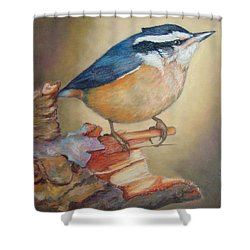 Red-breasted Nuthatch Bird Shower Curtain by Janet Garcia