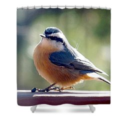 Red-breasted Nuthatch Shower Curtain by Marilyn Burton