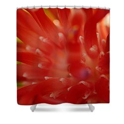 Shower Curtain featuring the photograph Red Bromeliad by Greg Allore