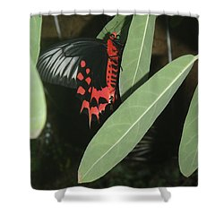 Shower Curtain featuring the photograph Red Butterfly by Robert Nickologianis