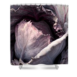 Red Cabbage Shower Curtain by Maria Urso