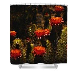Red Cactus Flowers  Shower Curtain by Saija  Lehtonen