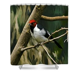 Red-capped Cardinal Shower Curtain