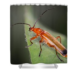 Red Cardinal Beetle Shower Curtain