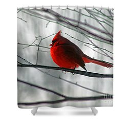 Red Cardinal On Winter Branch  Shower Curtain by Karen Adams