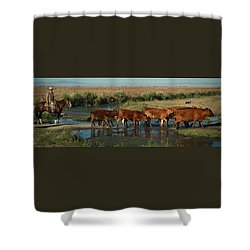 Red Cattle Shower Curtain by Diane Bohna