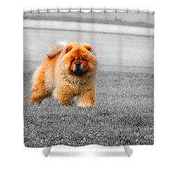 Red Chow Shower Curtain by Jai Johnson