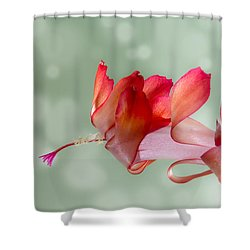 Red Christmas Cactus Bloom Shower Curtain