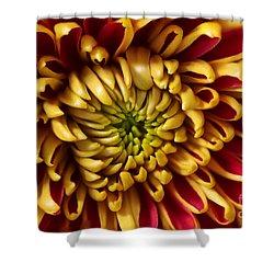 Red Chrysanthemum Shower Curtain by Matt Malloy