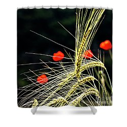 Red Corn Poppies Shower Curtain