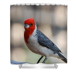 Red Crested Cardinal Shower Curtain by DejaVu Designs