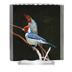 Red-crested Cardinal Shower Curtain